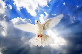 Roh Kudus merpati 02