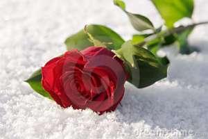 bunga salju