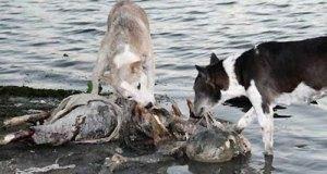 mayat dimakan anjing.htm